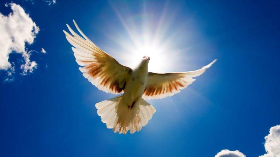 Ano da Paz: O papa é um mensageiro da paz!